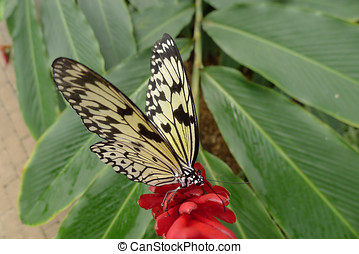 paper kite butterfly on a red flower