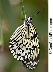 paper kite butterfly is hanging on a laef