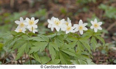 Spring flowers. Macro shot.