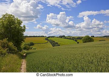 yorkshire wolds summer landscape - an agricultural landscape...