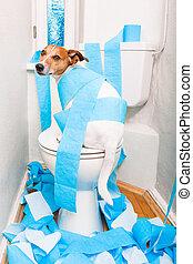 洗手間, 狗, 座位