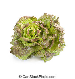 Batavia lettuce isolated on white background