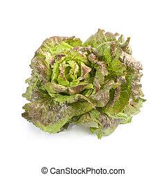 Batavia lettuce isolated on white background