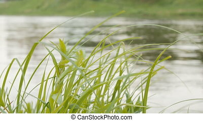 Green grass on wind over water background