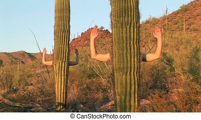 Human Cactus - Arms reaching out from the trunks of Saguaro...
