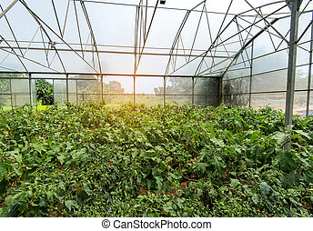 ferme,  hydroponic