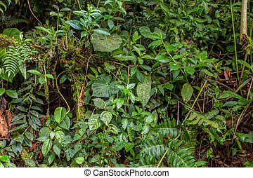 Tropical Rainforest, Amazonian Jungle, National Park Yasuni,...