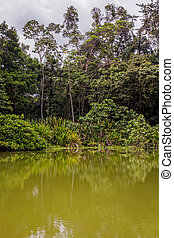 Amazonian Jungle, Cuyabeno Wildlife Reserve, South America