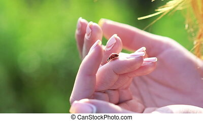Ladybug on the soft woman's hands. Slowly.