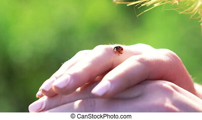 Ladybug on the woman's hands on green field background....