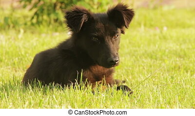 Homeless Dog Sitting in the Grass Young wild stray black dog...