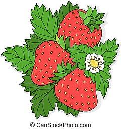 Ripe juicy strawberries