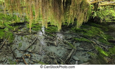Hoh Rain Forest - Stream running through the Hoh Rain Forest