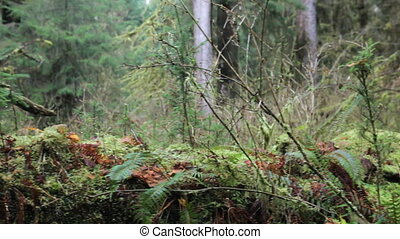Hall of Mosses Saplings - Close up of young saplings on a...
