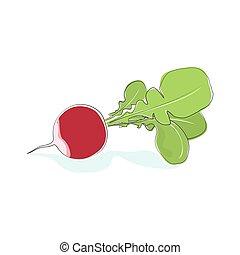 Radish Vegetable with Leaves Isolated on White - Radish,...