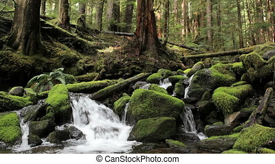Olympic National Park river - The Sol Duc river falling over...