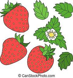 Set ripe juicy strawberries