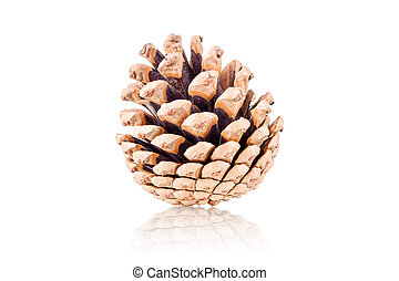 pinecone - pine cone isolated on white background