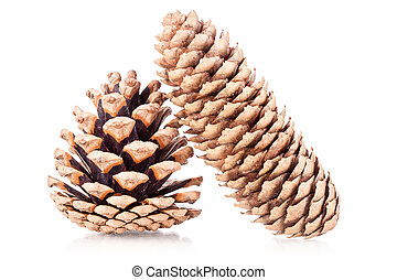 pinecones - two pinecones isolated on white background