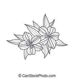 Wild Flower Monochrome Drawing For Coloring Book Hand Drawn...