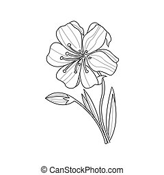 Marigold Flower Monochrome Drawing For Coloring Book Hand...