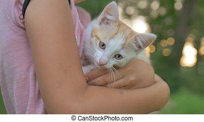 girl brunette holding kitten in her cat teen arms love...