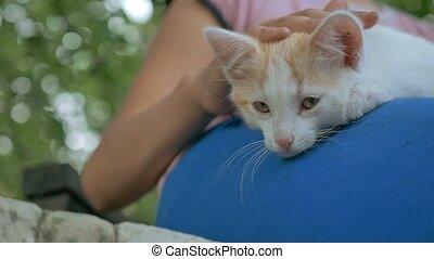 girl brunette teen holding kitten in her arms love outdoors...