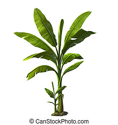 illustration of banana tree - banana tree isolated on white...