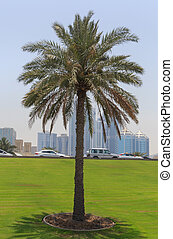sight of Sharjah - palm tree at road in Sharjah, UAE