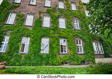 covered with ivy wall