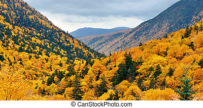 White Mountain - Colorful Autumn foliage in White Mountain,...