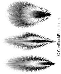 Set of feathers Vector - Set of different feathers of birds...