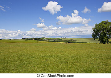 yorkshire wolds grass meadow - a green grass meadow in the...