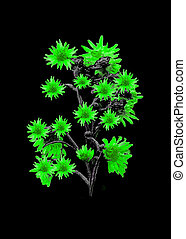 Isolated Flowers over Black - Digital photo manipulation...