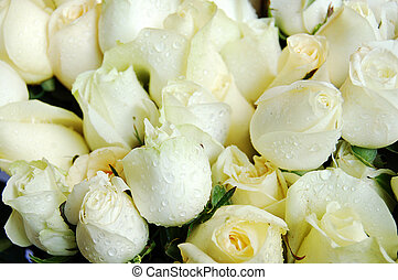 close up of a bouquet of white rose