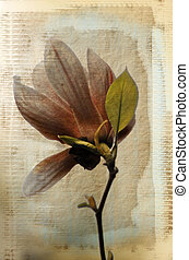 magnolia - a grungy image of a magnolia flower