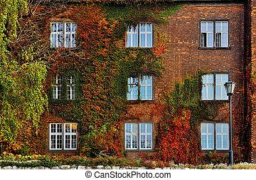 otoño, hojas, con, blanco, Windows, en, viejo,...