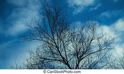 Time lapse video of leafless tree against cloudy sky clip