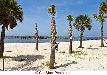 Palm Trees on the Beach - A Single New Palm Tree planted on...