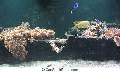 Fish And Coral In Aquarium