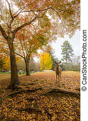 Deer in Nara Park - Wild deer roam free in Nara Park.