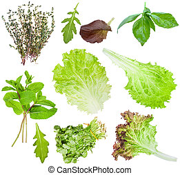 set of fresh salad leaves isolated on white - set of various...