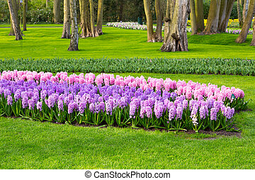 Colorful flowers blossom in dutch spring garden - Colorful...
