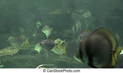 Underwater Fish Swimming In Fish Tank