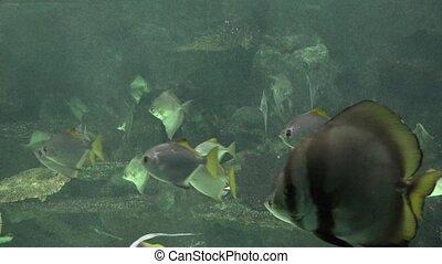 Underwater Fish Swimming In Fish Tank