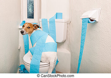 dog on toilet seat and paper rolls - jack russell terrier,...