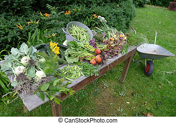 fresh vegetables from the garden on a garden table - fresh...