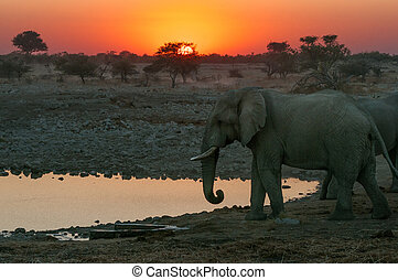 Fiery sunset with elephants - A fiery sunset with elephants...