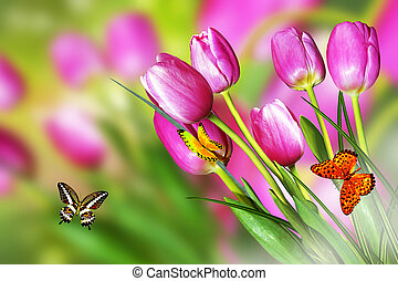 Pink and yellow flowers tulips and daffodils - Pink flowers...