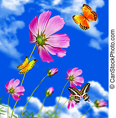 cosmos flowers. butterfly